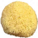 Caribbean Grass Sponge
