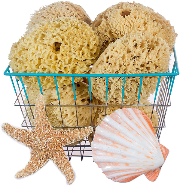 Basket full of Wool Sea Sponges