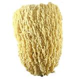 Wire Grass Vase Sponge aka Sea Cap