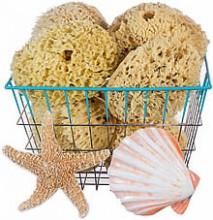 Sea Sponge & Loofah