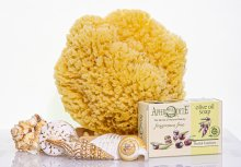 Yellow Sea Sponge Bath Kit