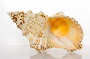 """Large 10"""" Decor Pacific Lampas Shell By SeaSationals"""
