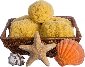 Yellow Sea Sponges - Mildly Exfoliating Bath Sponge