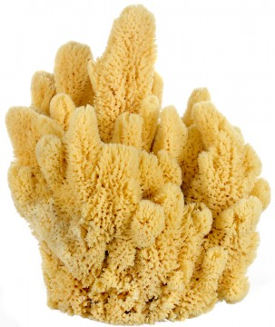 Bahamian 'Mangrove Key' Decor Sponge
