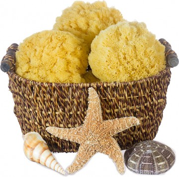 Caribbean Grass Exfoliating Bath Sponges