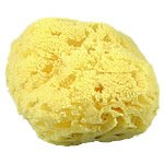 Natural Yellow Sponges Craft Cuts